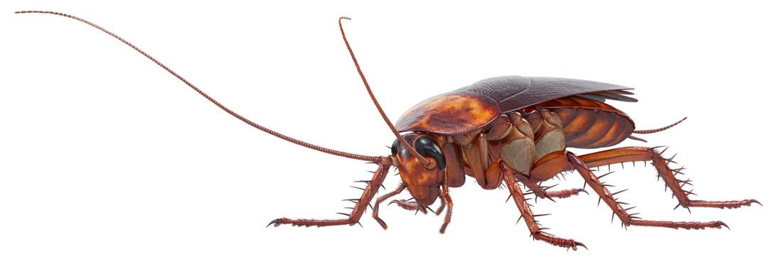 Gardreform AS tilbyr bekjempelse av insekter
